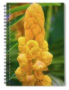 Candle Bush Tree Spiral Notebook