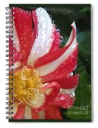 Candy Cane Dahlia Spiral Notebook