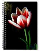 Candy Cane Tulip Spiral Notebook