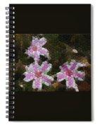 Candy Striped Phlox Spiral Notebook