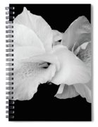 Canna Lily In Black And White Spiral Notebook
