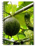 Cantaloupe And Hanging On Tree 1 Spiral Notebook
