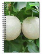 Cantaloupe Fruit On Its Tree Spiral Notebook