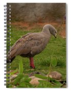 Cape Barren Geese Facing Right Spiral Notebook