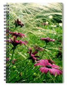 Cape Daisies And Angel Hair Spiral Notebook