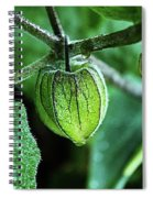 Cape Gooseberry In July Spiral Notebook