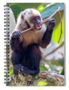 Capuchin Monkey Chewing On A Stick Spiral Notebook