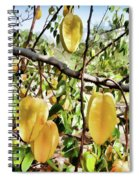 Carambola Fruit On The Tree Spiral Notebook