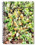 Carambola  Spiral Notebook