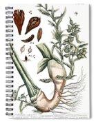 Cardamom, 1735 Spiral Notebook