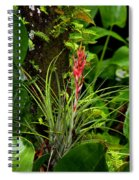 Cardinal Airplant Spiral Notebook
