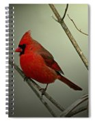 Cardinal And The Setting Sun Spiral Notebook