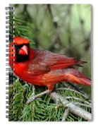 Cardinal Attitude Spiral Notebook
