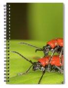 Cardinal Beetle  Spiral Notebook