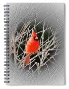 Cardinal Centered Spiral Notebook