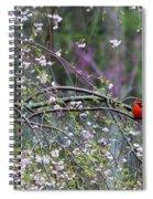 Cardinal In Flowering Tree Spiral Notebook