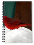 Cardinal In Snow II Spiral Notebook