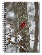 Cardinal In Snow Storm Spiral Notebook