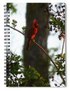 Cardinal In The Crepe Myrtle Spiral Notebook