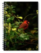 Cardinal In The Trees Spiral Notebook