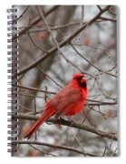 Cardinal In The Winter Spiral Notebook