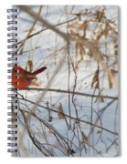 Cardinal In Winter 2 Spiral Notebook
