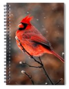 Cardinal On A Snowy Day Spiral Notebook