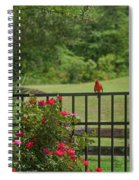 Cardinal On Fence Spiral Notebook