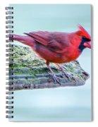 Cardinal Perched Spiral Notebook
