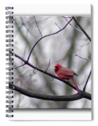 Cardinal Perched On A Branch Spiral Notebook