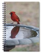 Cardinal Reflection Spiral Notebook