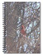 Cardinal Singing  Spiral Notebook