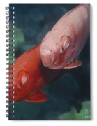 Cardinalfishes Spiral Notebook