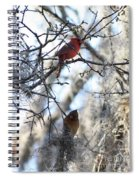 Cardinals In Mossy Tree Spiral Notebook