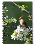 Cardinals In Spring Spiral Notebook