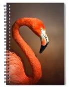 Caribean Flamingo Portrait Spiral Notebook