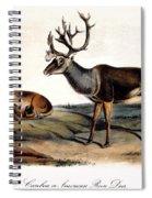 Caribou (rangifer Caribou): Spiral Notebook
