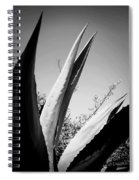 Carmel Mission Agave In B And W Spiral Notebook