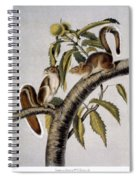 Carolina Grey Squirrel Spiral Notebook