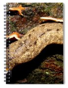 Carolina Mantle Slug Spiral Notebook