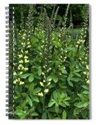 Carolina Moonlight Spiral Notebook