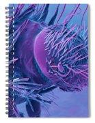Carpet Beetle Larva, Sem Spiral Notebook