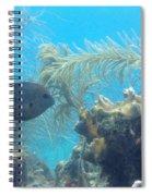 Carribean Sea Life Spiral Notebook