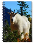 Cascade Range Mountain Goat Spiral Notebook