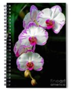 Cascading Orchid Beauties Spiral Notebook