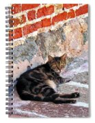 Cat Against Stone Spiral Notebook