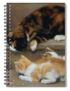 Cat And Kittens Chasing A Mouse   Spiral Notebook