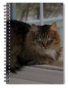 Cat By Candlelight Spiral Notebook