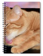 Cat Cleaning At Sunset Spiral Notebook