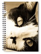 Cat Days Of Summer Spiral Notebook